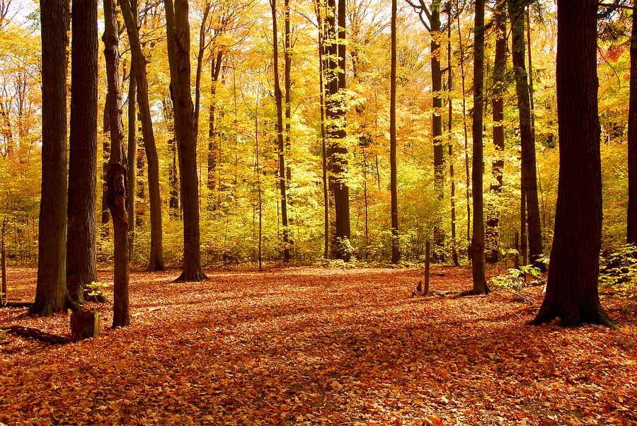10 Sexy Fall Date Ideas forest hike