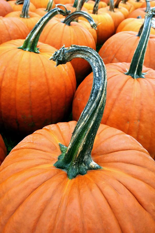 10 Sexy Fall Date Ideas pumpkin patch